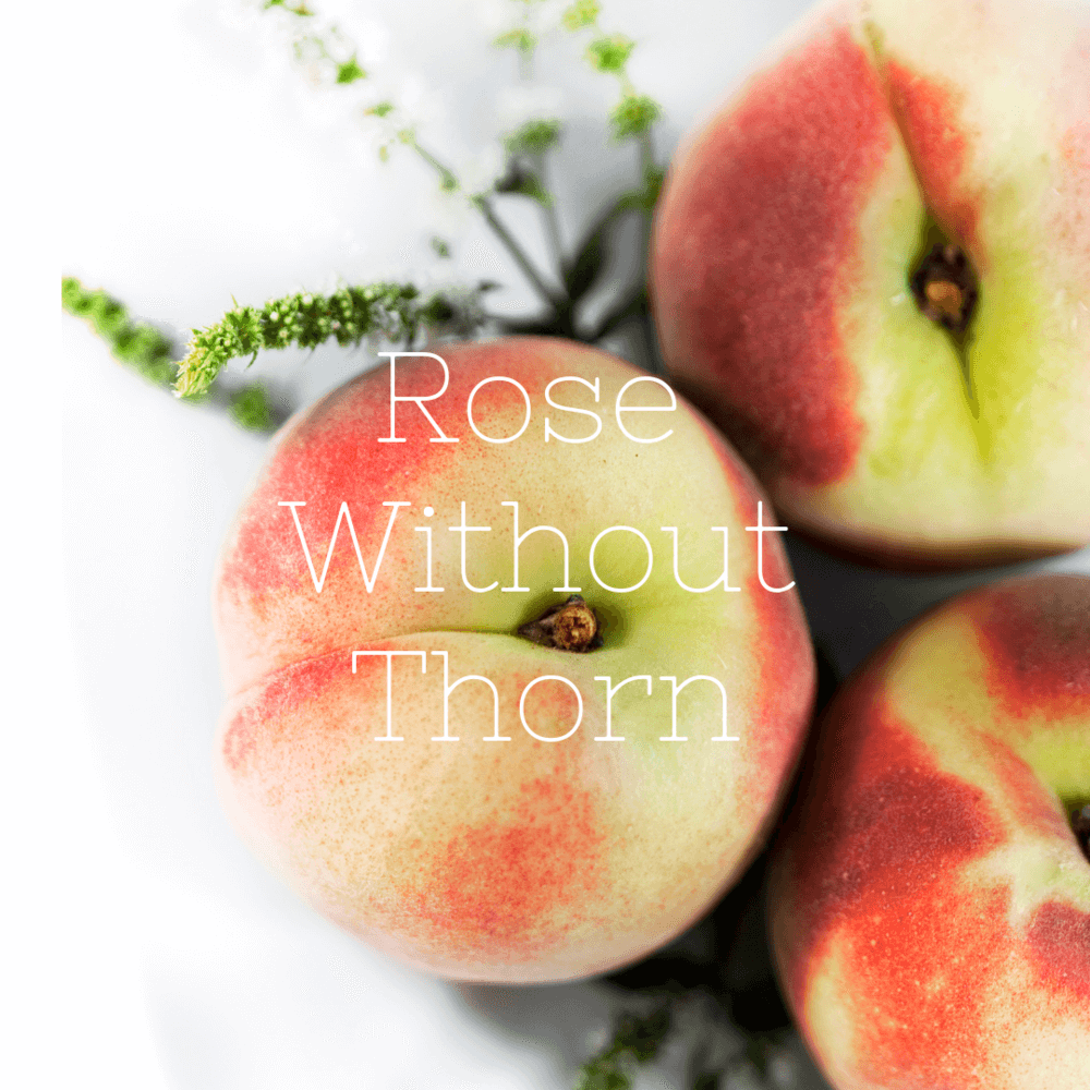 Rose Without Thorn